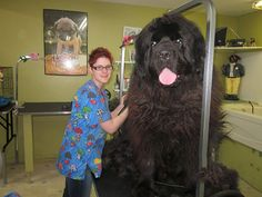 29 BIG Dogs Are Bigger Than They Think -  #big #dogs #pets