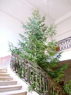 The Christmas tree is still in the vestibule. We're still working out a way to take it down! It really is like the Rockefeller of Christmas trees—the local mayor dropped it off as a Christmas gift.