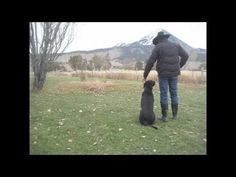 I want a puppy to train as a hunting dog and a BFF in the worst way!!!! Aspen Dog Trainer Black Labrador Retriever