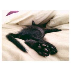 soft paws & fuzzy fur ++ @Sara/Matchbox Kitchen