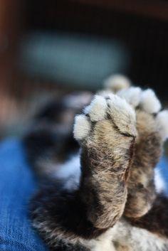 bunny feet.....awww...♥ me some bunny feet! :) g  Cuz we all love some Bunny feet
