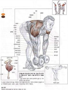 [어깨운동] 래터럴 레이즈 팔의 각도에 따른 변화 :: 맨몸 운동의 모든것