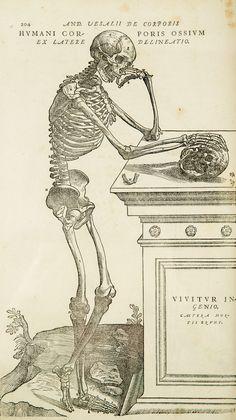 Vesalius-copy.jpg (2557×4554)