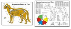 Acupuncture - Cats & Dogs RePinned with you in mind by www.HealingRadius.com