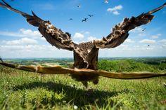 Wide-angle Kite, Red Kite By Jamie Hall, United Kingdom. Birds In Flight Category