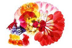 押し花アート写真集『flora』- 多田明日香が美しい花々の世界で彩る鮮やかな骨格の写真4