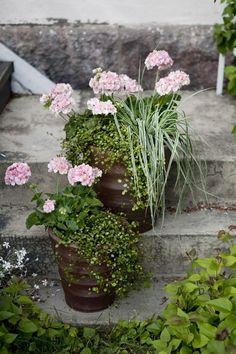 Plants and flowers to your balcony / terrace/ garden Terrace Garden, Garden Plants, Potted Plants, Container Gardening, Gardening Tips, Outdoor Living Patios, Grandmas Garden, Garden Windows, How To Attract Birds