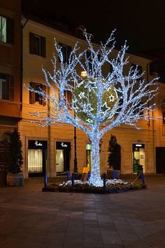 Christmas in Rome, I love when the trees are wrapped like this