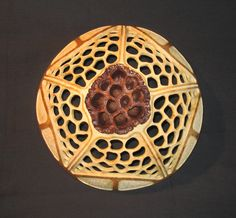 Lotus Pod & Carved Gourd Decorative Wall Hanger by BeechCreekGourds on Etsy
