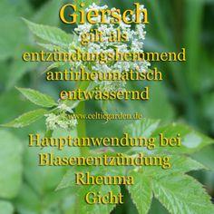 gierschsteckbrief Artemisia Absinthium, Herbal Medicine, Organic Recipes, Planting Flowers, Natural Remedies, Herbalism, Healthy Living, Health Fitness, Herbs