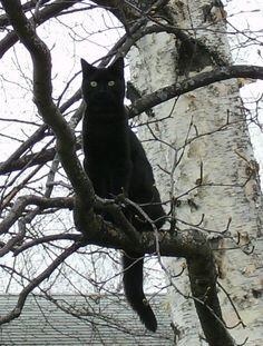 Black Cat Spooky Tree  by ~SinfulNeko-eh