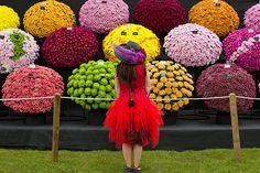 2014 RHS Chelsea Flower Show
