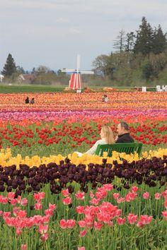 Wooden Shoe Tulip Festival, Woodburn, OR  woodenshoe.com Burgundy Lipstick, Coral Lipstick, Tulip Colors, Dutch Tulip, Tulip Festival, Purple Tulips, Flower Farm, Wooden Shoe, Outdoor