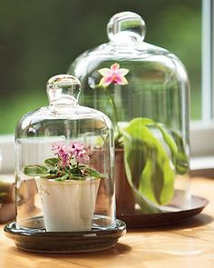 adding cloches and bell jars to my list of things to hunt and thrift and turn into mini greenhouses