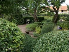 TrädgårdsTankar: Tusen trädgårdar - Ulla Molins trädgård, Höganäs Topiaries, Garden Photos, Garden Structures, Green Garden, Rest Of The World, Backyard Landscaping, Garden Inspiration, Beautiful Gardens, Gardening Tips