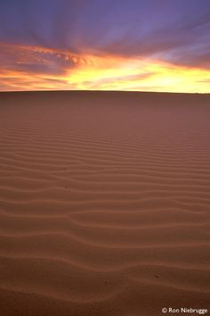 Coral pink sand dunes state park, Utah. You can't see in the picture, but the sand is honestly pink. Really beautiful.