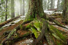 roots by Peter Oslanec Roots, Photography, Fotografie, Photography Business, Photo Shoot, Fotografia, Photograph