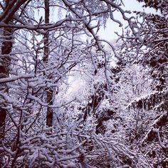 Winterwonder land Gripsholmsvägen i Jonsered