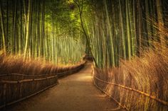 Bamboo Grove  Landscapes photo by WojciechToman http://rarme.com/?F9gZi