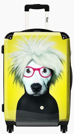 Suitcase Hairy doggy