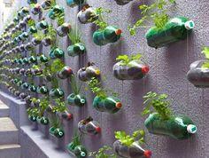 plant, plastic bottles, garden ideas, soda bottles, street art utopia, pop bottles, herbs garden, wall gardens, hanging gardens
