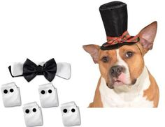 Formal Black Satin Bow Tie Tux Collar with Cuffs and Caroler's Hat - Daisey's Doggie Chic - 6