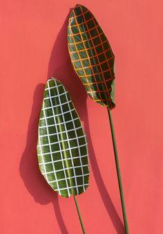 Wonderplants | Sarah Illenberger