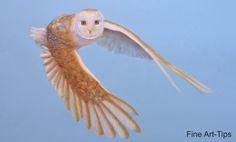 How to Draw a Barn Owl Flying - With Pastel Color Pencils #art #drawing #FineArtTips #barnowl #pastels #tutorial #artistleonardo #LeonardoPereznieto  Take a look to my book here: http://www.artistleonardo.com/#!ebooks-english/cswd