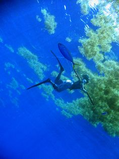 Blue-water-spearfishing