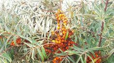Herfst to-do of inspiratielijstje - Talks & Treasures Fall, Plants, Autumn, Fall Season, Plant, Planets
