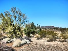 Spanish Sword in desert Landscape Photos, Desert Landscape, Royalty Free Photos, Tiny House, Spanish, Bush, Deserts, Country Roads, Landscapes