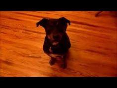 ▶ Cão se enconde da polícia || GFM - YouTube #funny #cute #dogs