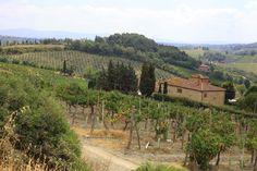 toskańska uprawa winorośli