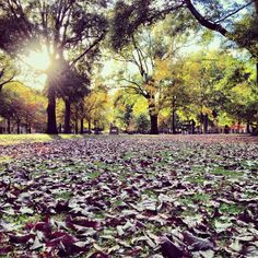 A fall afternoon on the #UofSC Horseshoe. Photo by zamee_: http://instagram.com/p/g6crbDIhTF/