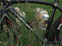 Carbon Rennrad, Fahrrad, Road Bike von m-bikeparts.