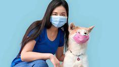 Coronavirus en mascotas - Dog Pet Pet Dogs, Corgi, Dog Cat, Pets, Dogs, Gatos, Animales, Corgis, Doggies