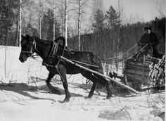Black Australian Shepherd, History Of Finland, Leopard Appaloosa, Tom Of Finland, My Land, Newfoundland, Brown Bear, Old Photos, Good Times