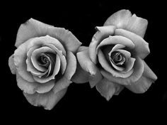 two roses - Google Search