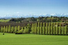 Les Pyrénées vues du #gers