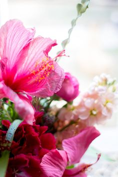 hibiscus_mimosa-6-of-10.jpg (800×1200)