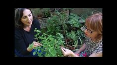 Come Preparare il tè alla menta marocchino 2 Ladies in giardino iscriviti e guarda anche gli altri video https://www.youtube.com/channel/UCGU1ctDD7W9f3URMZBE1qtw