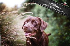 Gismo No. 4  ...unser Gute - Laune - Bär.  Wir bedanken uns bei Seda Kurmut für das tolle Bild. (Simba the King of Dogs)  #printmelion #onlinedruck #Gismo http://www.printmelion.de