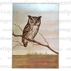 Digital Graphic Owl Illustration Printable Color Bird Image Download HQ 300dpi No.907 @ vintageretroantique.etsy.com #DigitalArt #Printable #Art #VintageRetroAntique #Digital #Clipart #Download