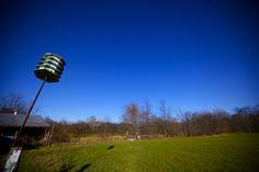 #bird #feeder #blue #sky #autumn #afternoon #sun #green