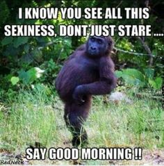 45 Funny Good Morning Quotes To Start Your Day With Smile 26