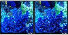 http://www.acuaristica.com/blog/2012/03/con-la-camara-lytro-toma-la-foto-primero-y-enfoca-luego-impresionantes-en-el-acuario/