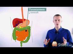 Matspjälkningen (Ny version) (Biologi) - Studi.se - YouTube