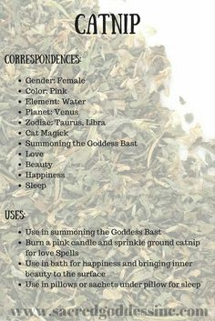 The Magick of Herbs: Catnip (Printable for Your BOS) – Witches Of The Craft® – herbal craft – Home Recipe Magic Herbs, Herbal Magic, Healing Herbs, Medicinal Herbs, Healing Spells, Herbal Plants, Witch Herbs, Herbal Witch, Kitchen Witch