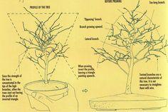 Green Workshop: Pruning Tips | Bonsai Bark