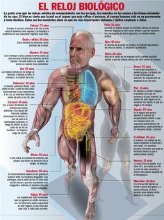 El reloj biológico y sus efectos sobre el cuerpo humano. #infografia #salud